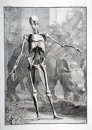 Skelrhino