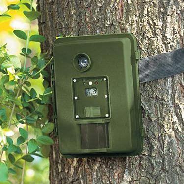 Wildlife Motion Detection Cameras